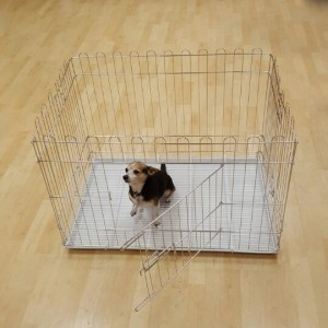 Alpha Dog Series Chrome Exercise Pen